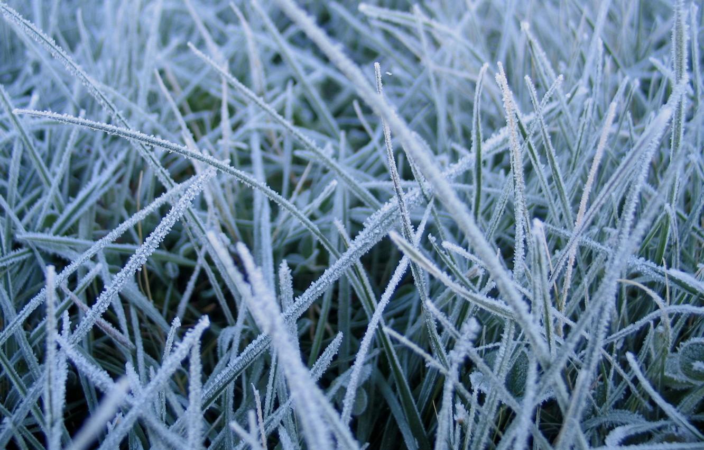 Photo wallpaper winter, grass, macro