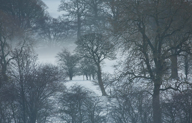 Photo wallpaper trees, winter, snow, fog, branches, mist