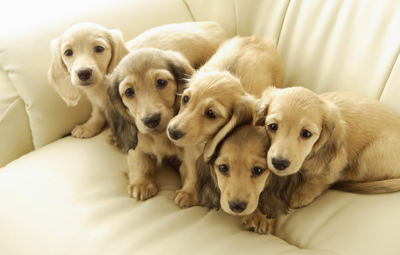 Photo wallpaper dogs, puppies, friends