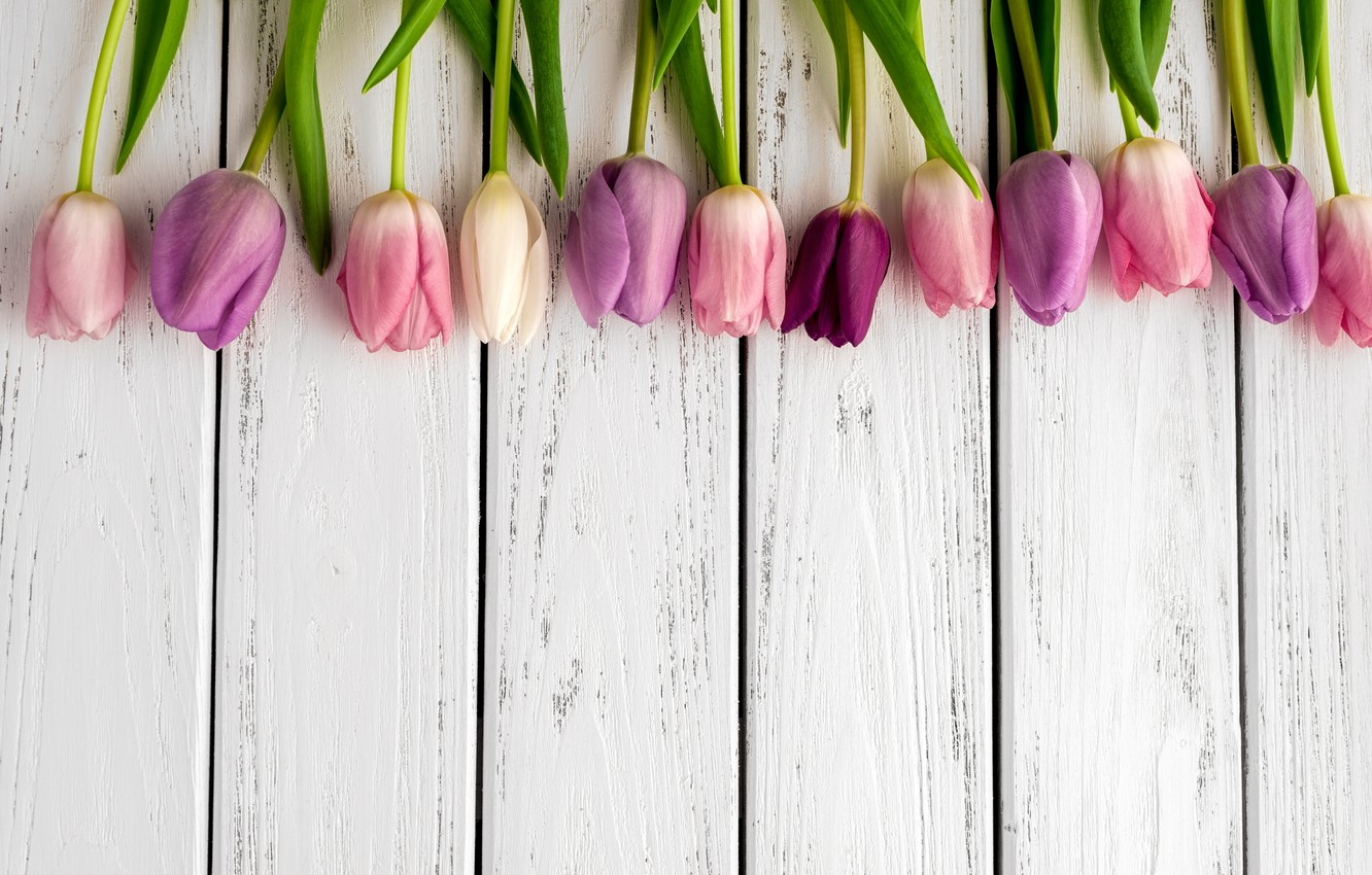 Wallpaper Colorful Tulips Flowers Tulips Bouquet Images For Desktop Section Cvety Download