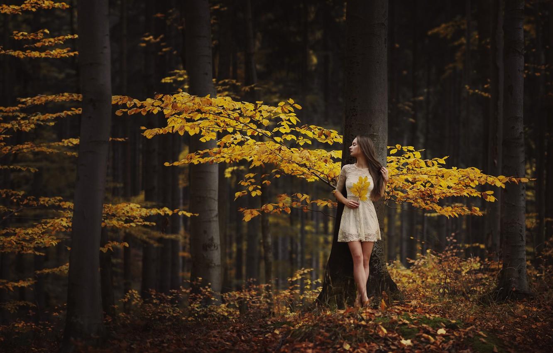 Photo wallpaper autumn, forest, girl