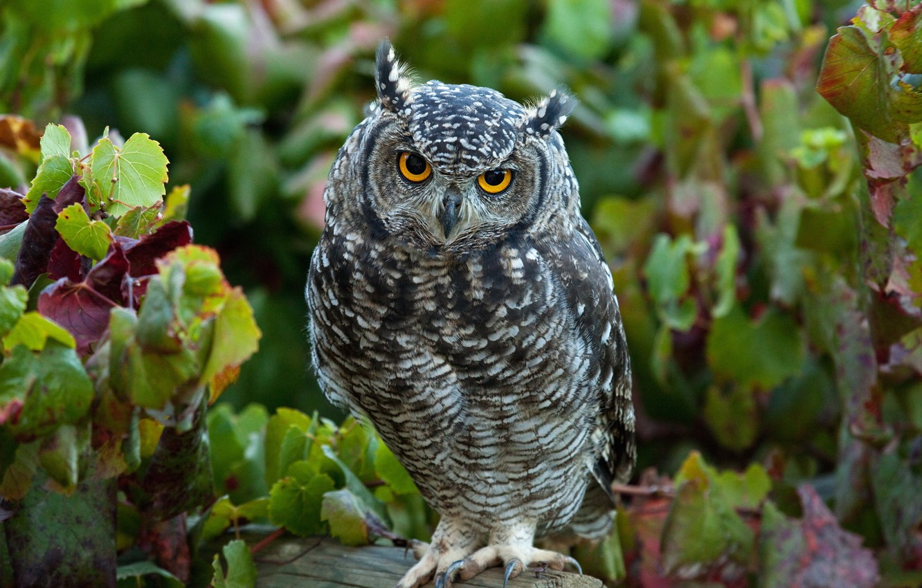 Photo wallpaper forest, look, leaves, owl, bird, log, owl, tail