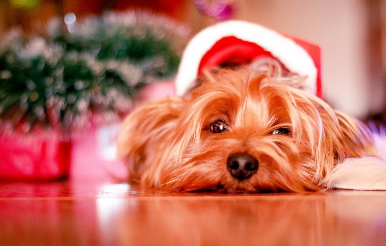 Photo wallpaper Christmas, dog, cute, puppy, christmas, puppy, dog, cute