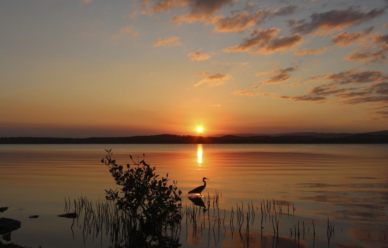Photo wallpaper the sun, sunset, lake, bird, Bush, the evening, Heron
