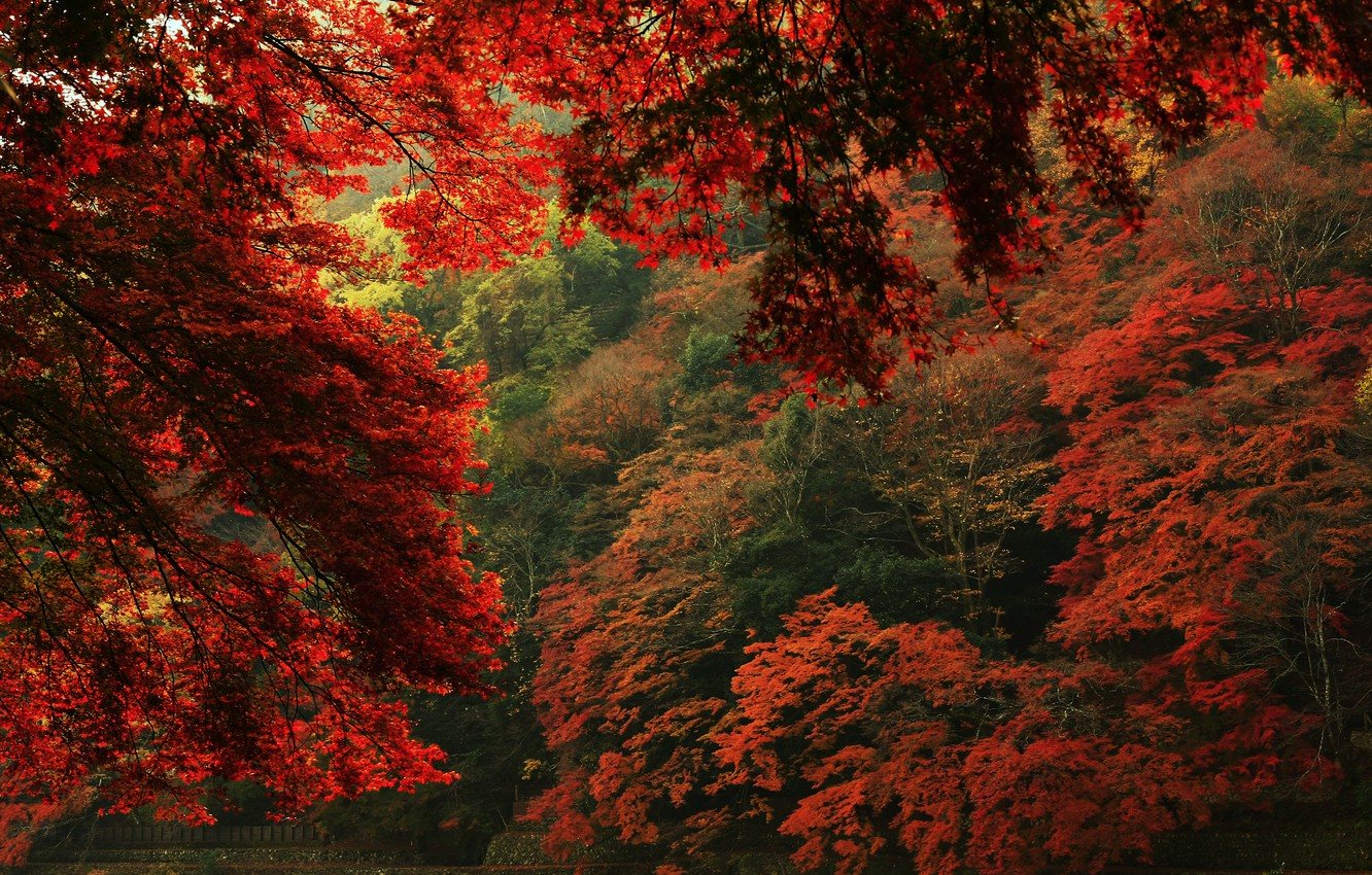 Photo wallpaper autumn, leaves, trees, nature, view