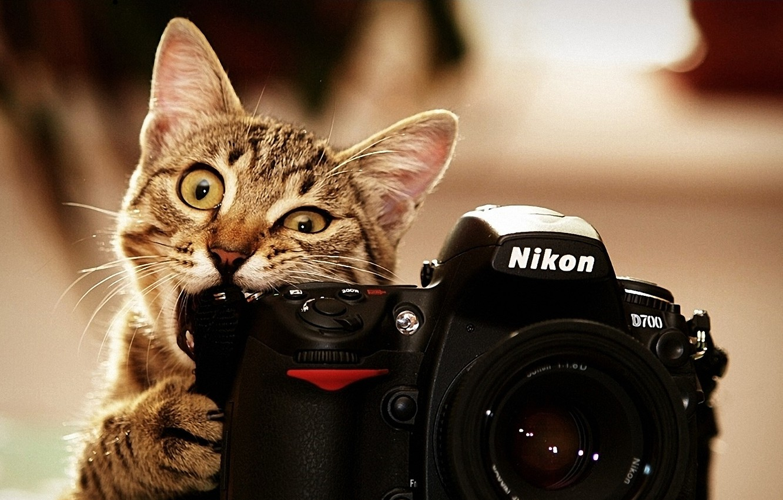 Photo wallpaper cat, photo, nikon, Kote