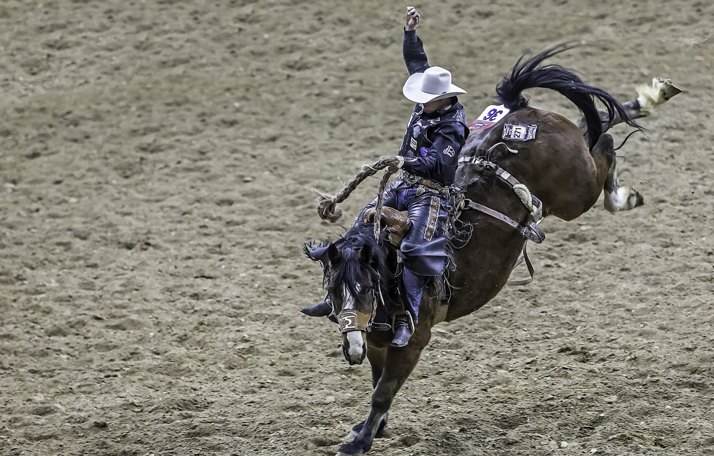 Photo wallpaper sports, Cowboy, Rodeo