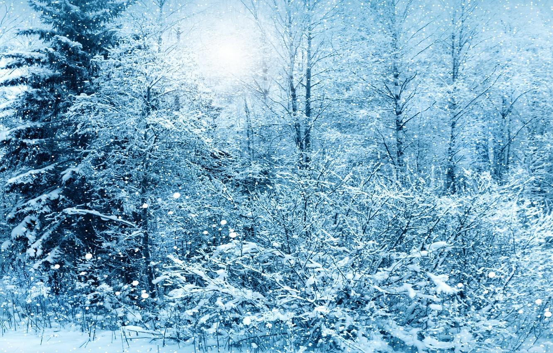 Photo wallpaper winter, snow, trees, nature, nature, winter, snow, tree