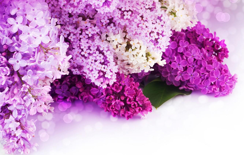 Photo wallpaper flowers, petals, purple, white, lilac, bokeh