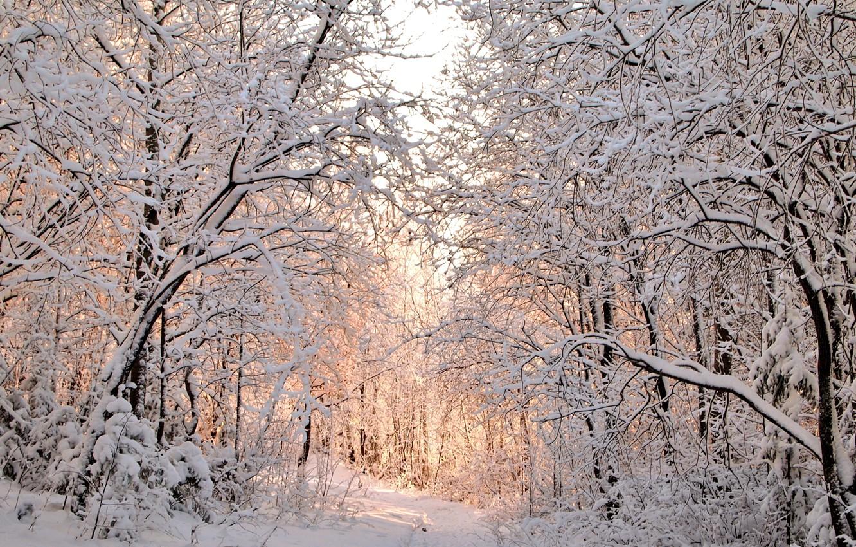 Photo wallpaper winter, snow, trees