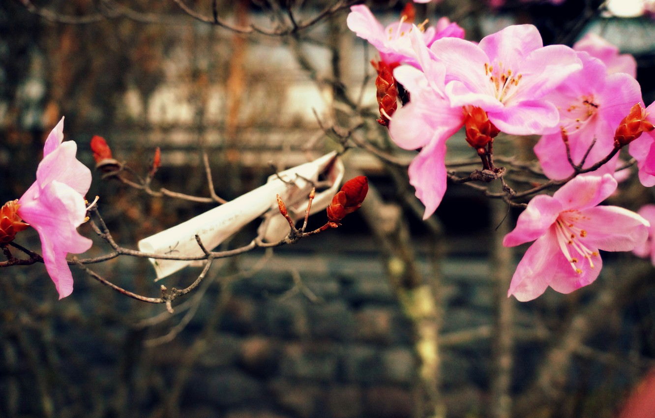 Photo wallpaper nature, spring, cherry blossoms, a piece of paper with wishes