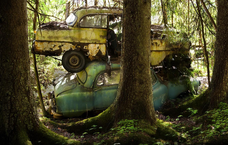 Photo wallpaper forest, machine, scrap