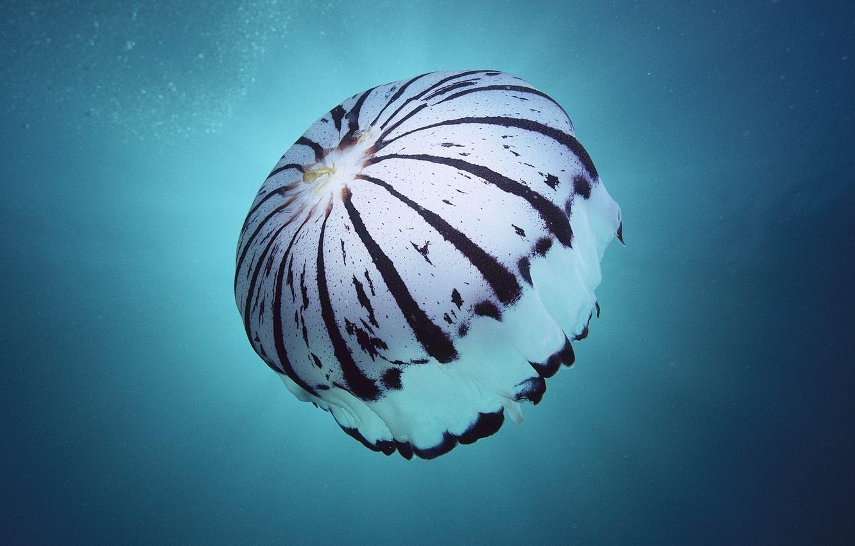 Photo wallpaper line, Sea, sponge