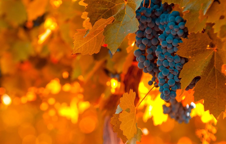 Photo wallpaper light, blue, foliage, food, grapes, orange, warm