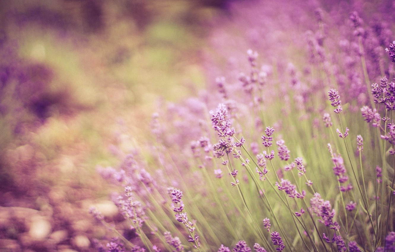 Photo wallpaper stems, bokeh, lavender
