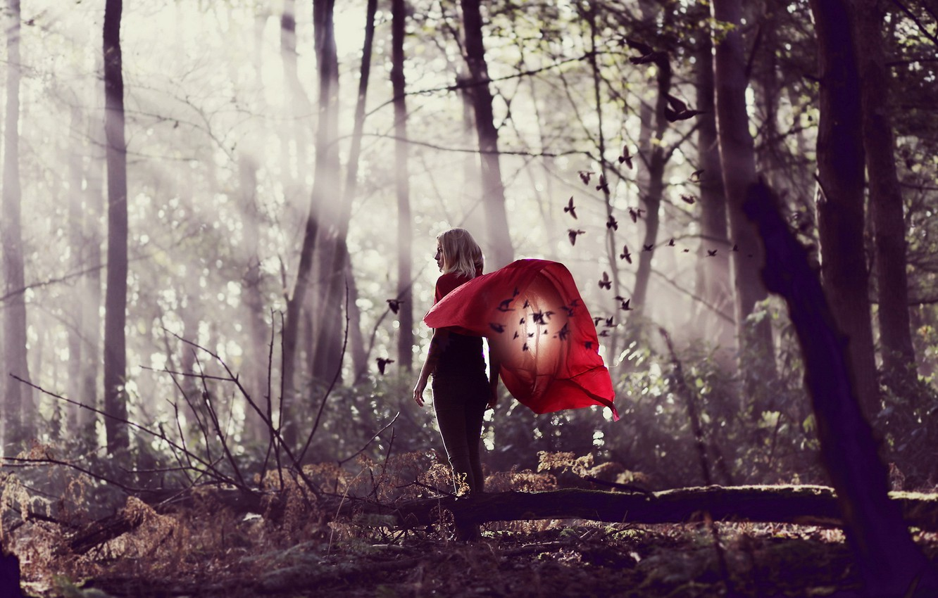 Photo wallpaper forest, girl, background