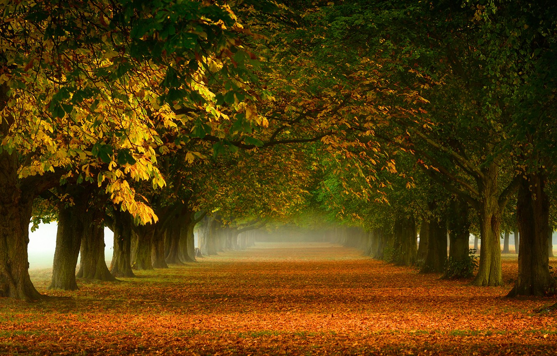 Photo wallpaper trees, nature, fog, foliage, orange, Autumn, track, alley, yellow, gold