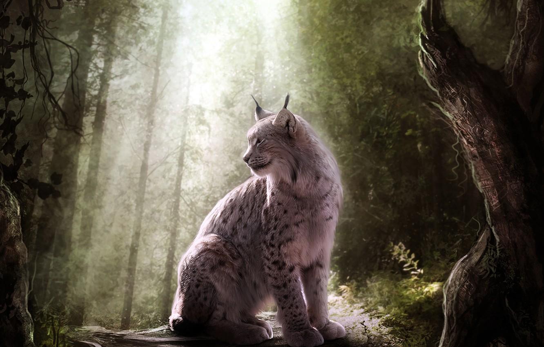 Photo wallpaper forest, cat, light, predator, lynx, wild
