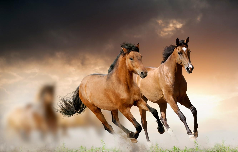 Photo wallpaper grass, clouds, horse, running