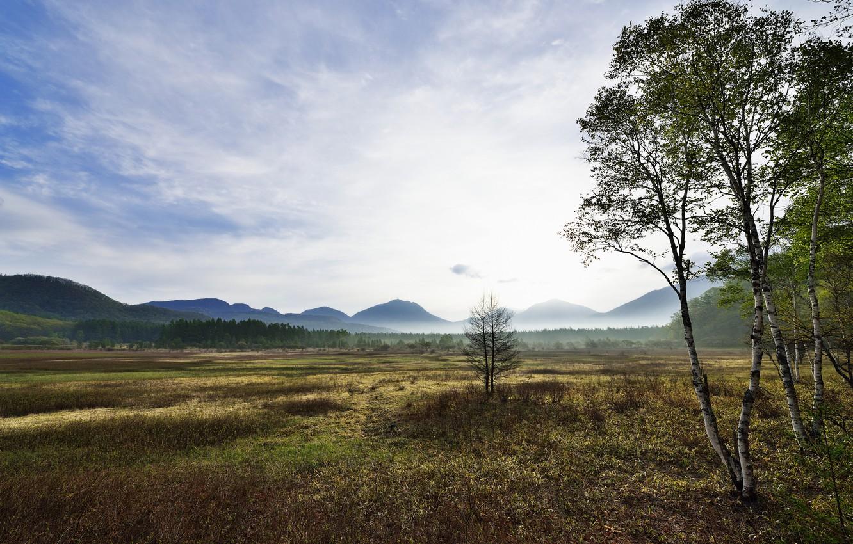 Photo wallpaper trees, mountains, fog, valley, birch
