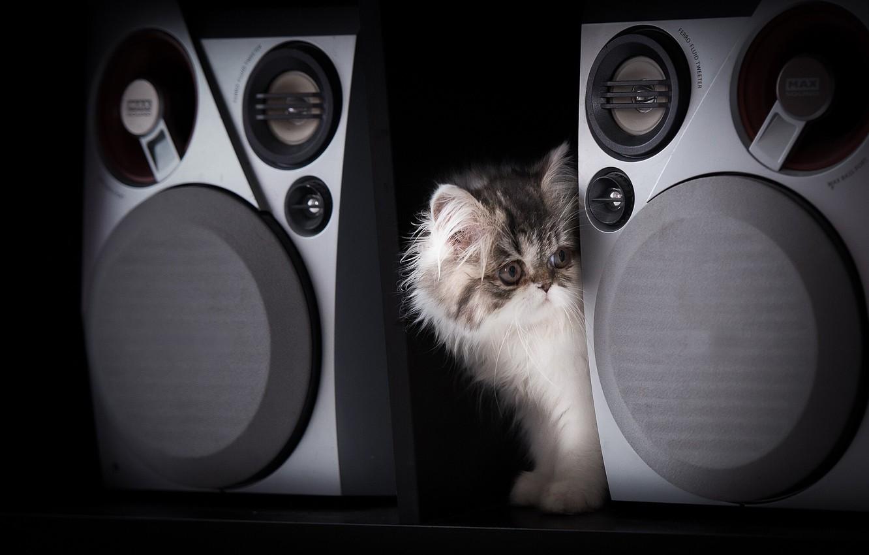 Photo wallpaper kitty, black background, music speakers