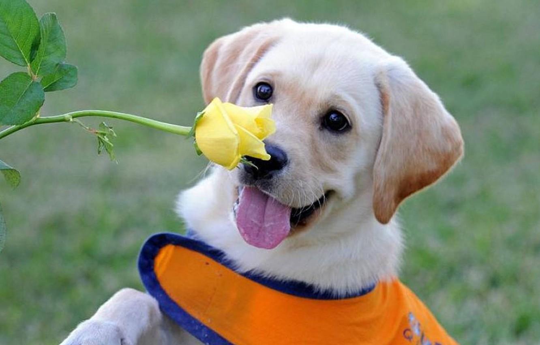 Photo wallpaper flower, rose, dog, flower, dog rose