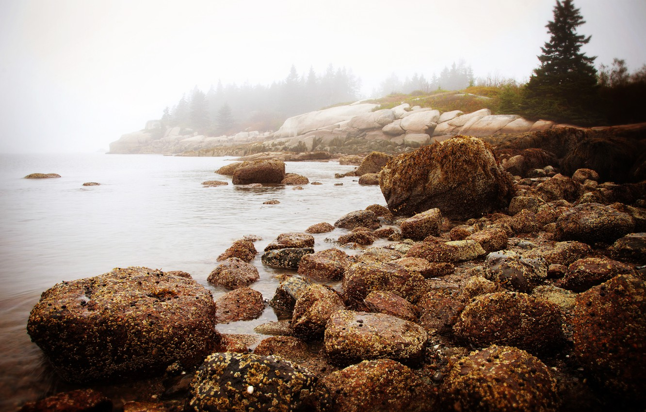 Photo wallpaper sea, forest, water, nature, fog, stones, morning, new England