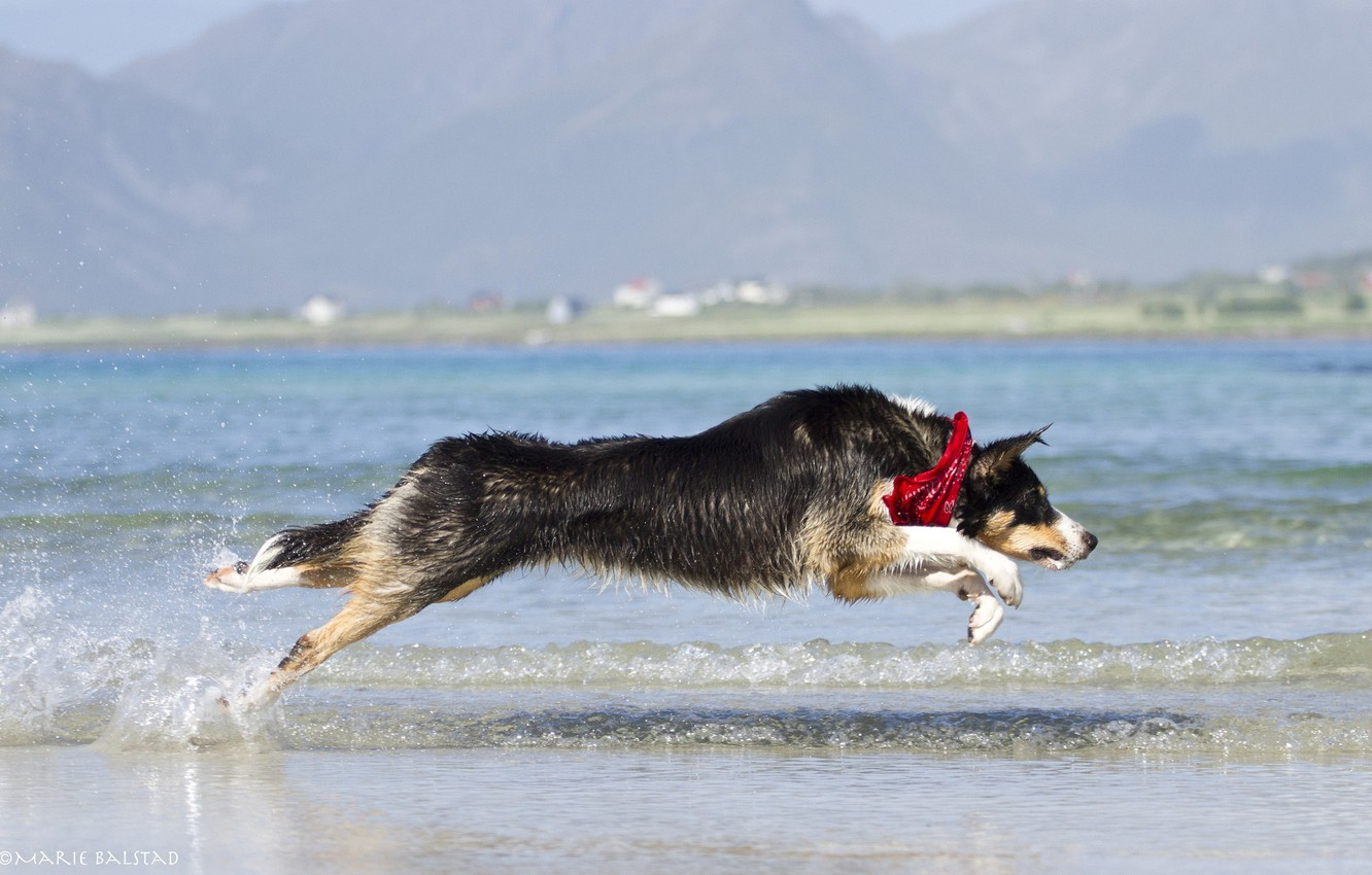 Photo wallpaper water, squirt, jump, shore, the game, wave, dog, running, dog