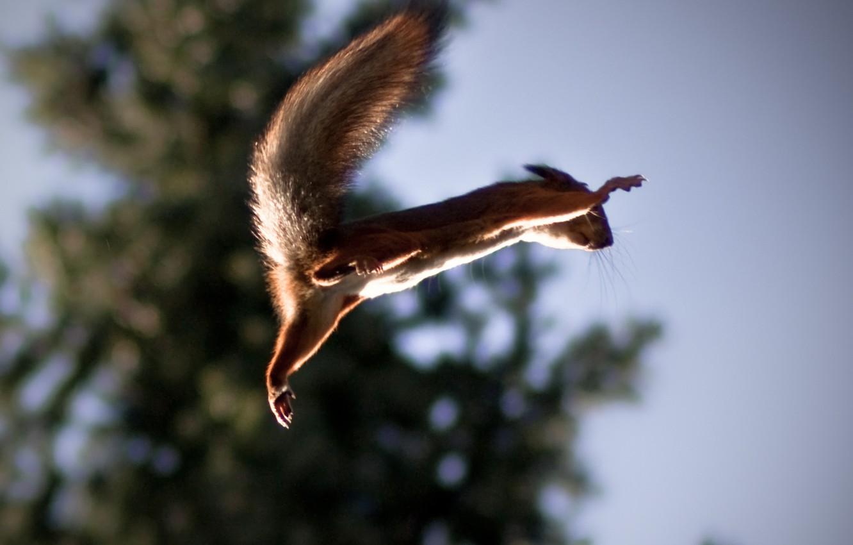 Photo wallpaper jump, protein, flight, Squirrel