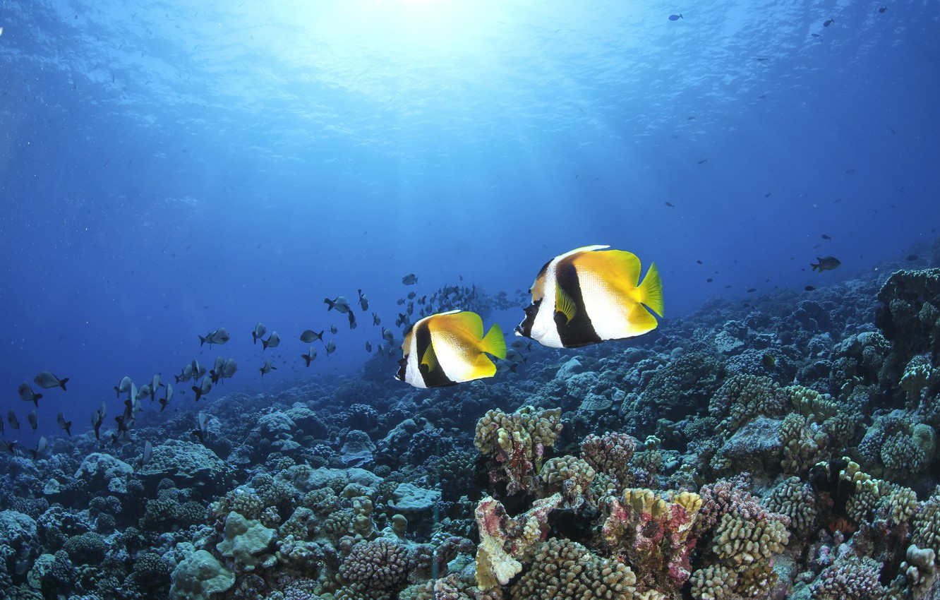 Photo wallpaper fish, corals, the bottom of the sea, blue water