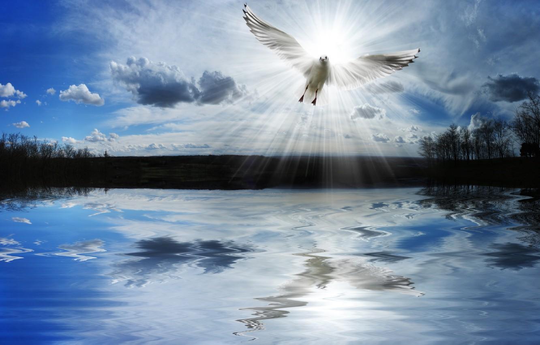 Photo wallpaper freedom, lake, dove, pond