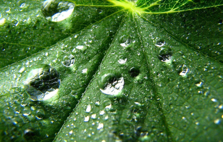 Photo wallpaper drops, sheet, green