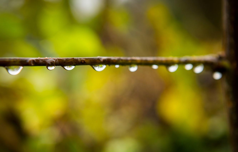 Photo wallpaper water, drops, macro, Rosa, Wallpaper, blur, branch, wallpaper, widescreen, background, macro, bokeh, drops, full screen, …