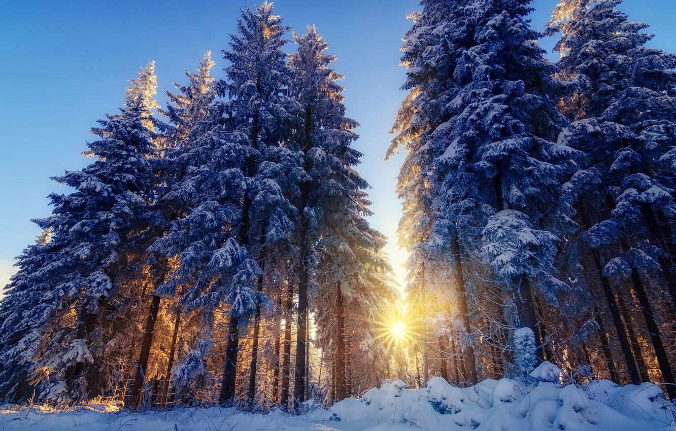 Photo wallpaper winter, forest, rays, light, snow, trees, nature, tree, the sun