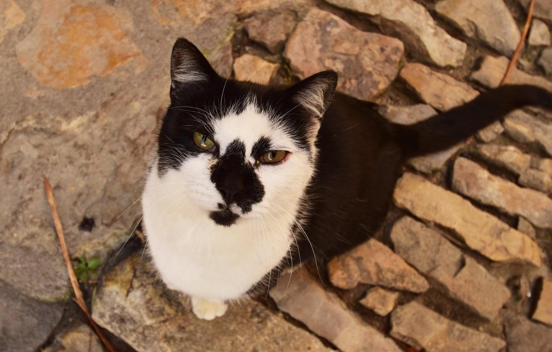 Photo wallpaper eyes, cat, Koshak, Tomcat