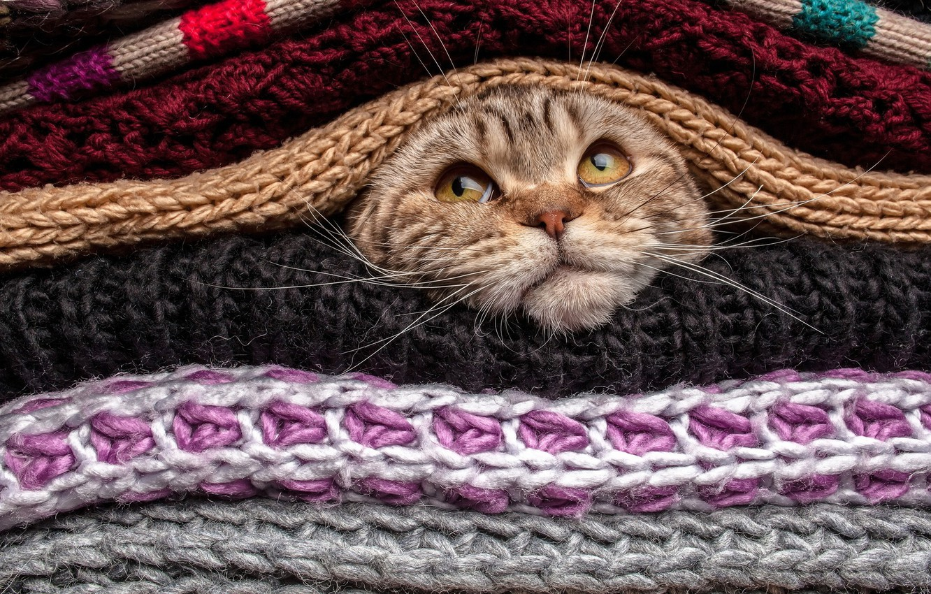 Photo wallpaper eyes, Cat, animal, funny, cute, situation, pet, head, covered, mustache, nose, gaze, sweater, wool