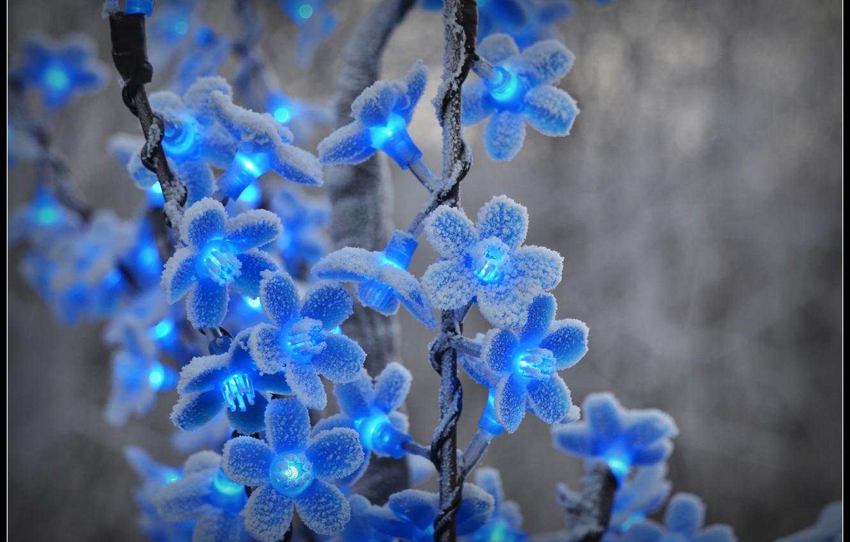 Photo wallpaper winter, frost, snow, flowers, frost, blue, garland, lanterns