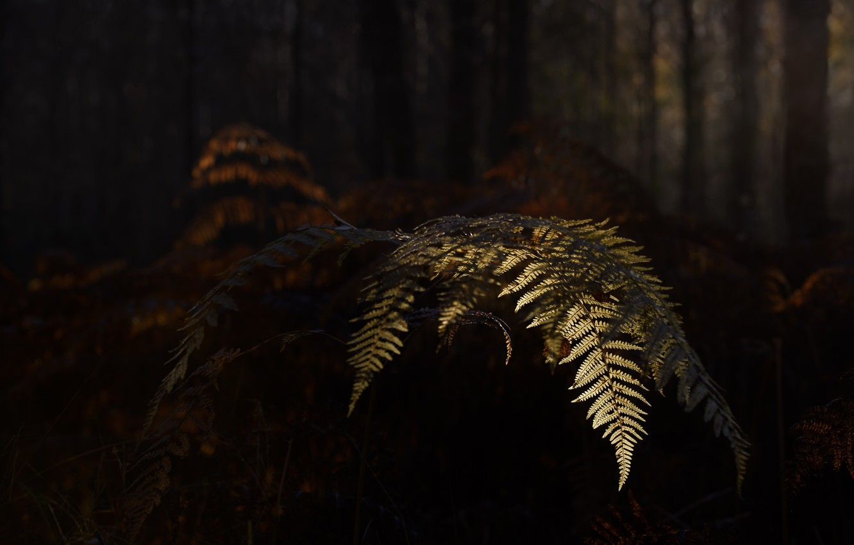 Photo wallpaper autumn, nature, fern