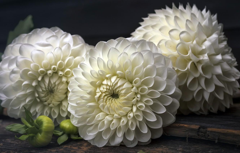 Photo wallpaper macro, flowers, background