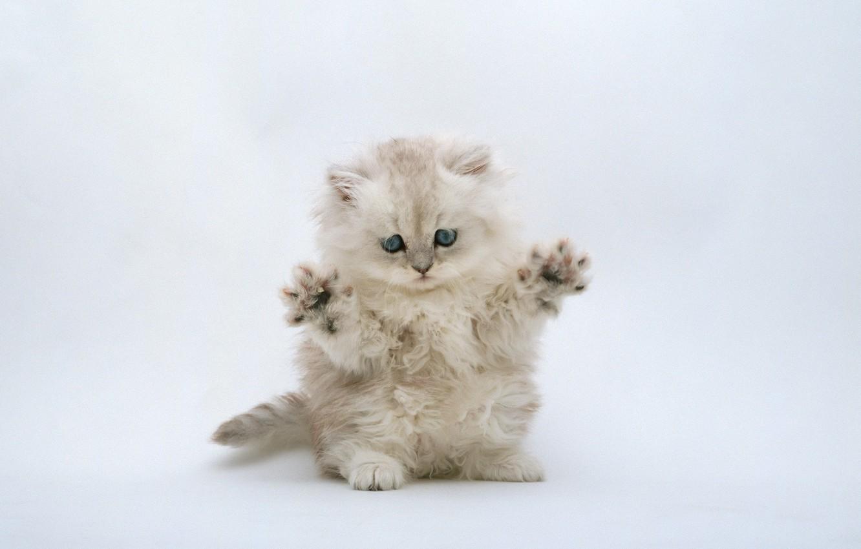 Photo wallpaper kitty, light