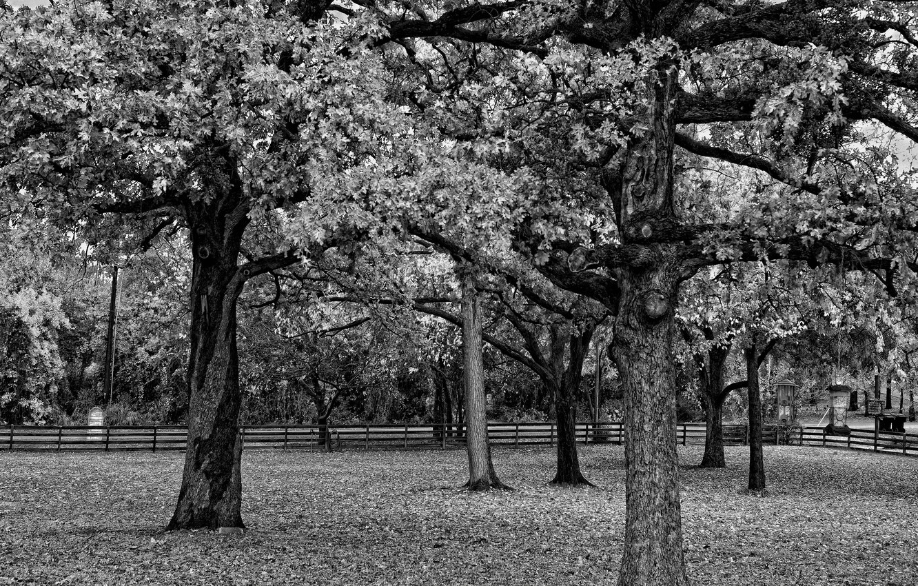Photo wallpaper black and white, The fence, Trees, Branch, Foliage