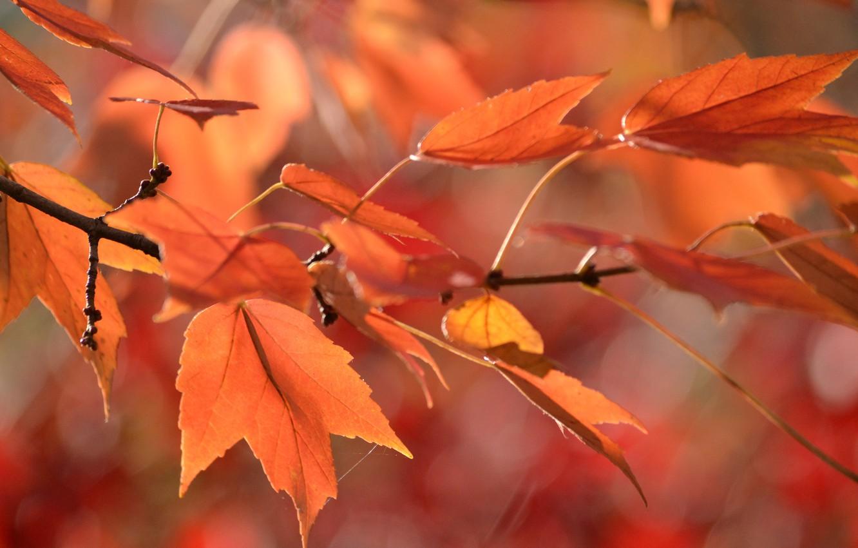 Photo wallpaper autumn, leaves, web, branch