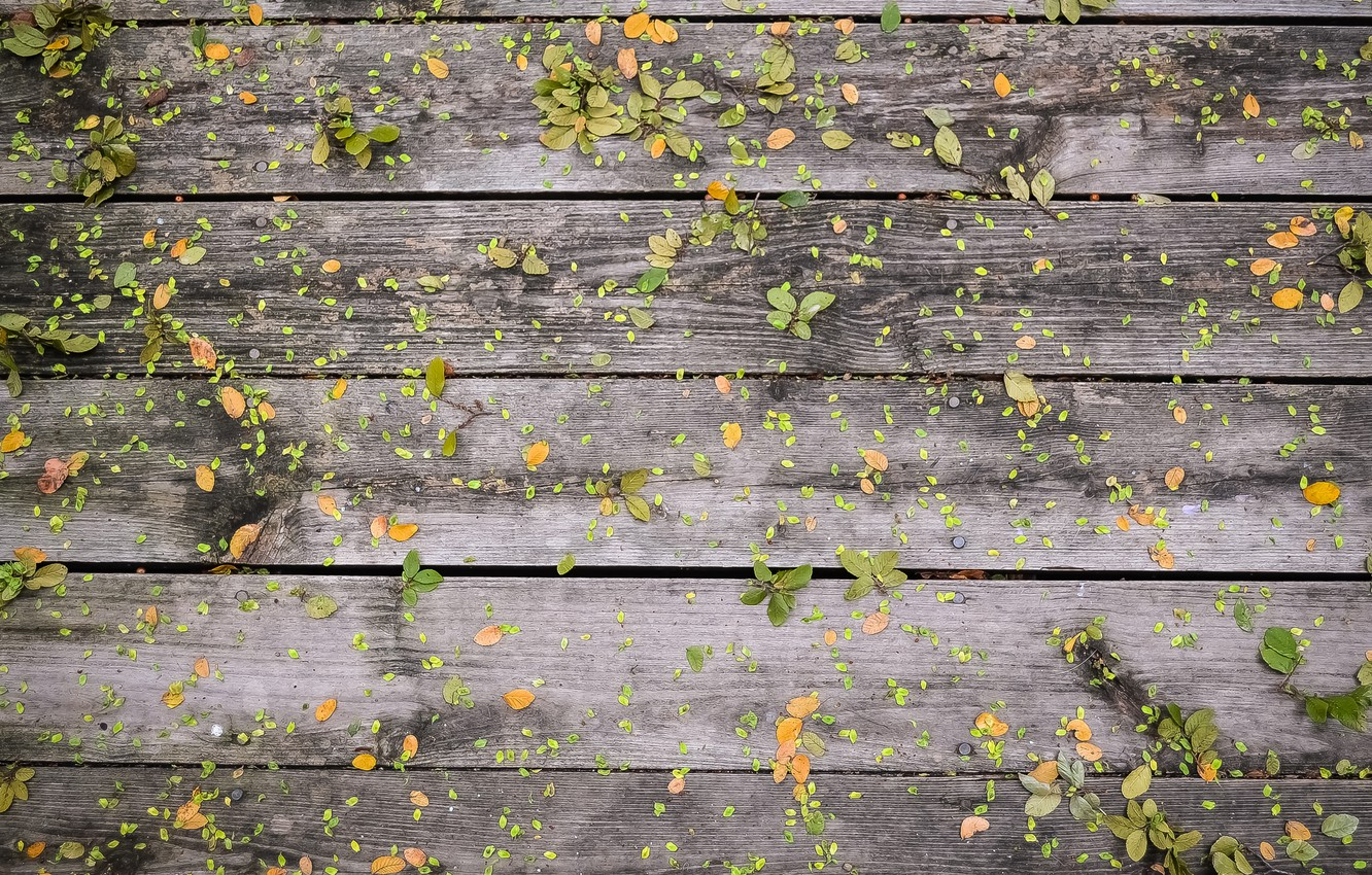Photo wallpaper leaves, Board, texture, Tree, leaves