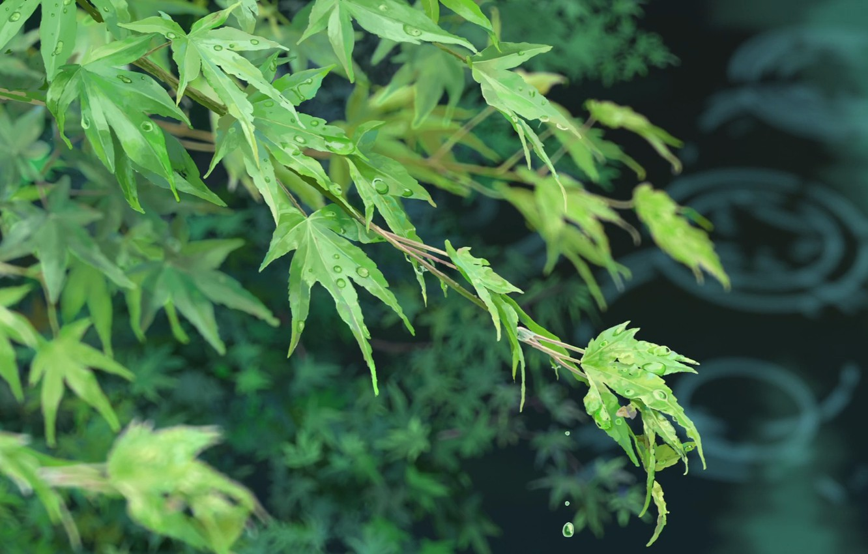 Wallpaper Leaves Kotonoha No Niwa The Garden Of Words Makoto