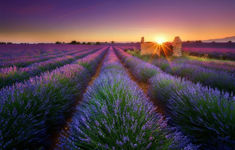 Photo wallpaper field, morning, lavender