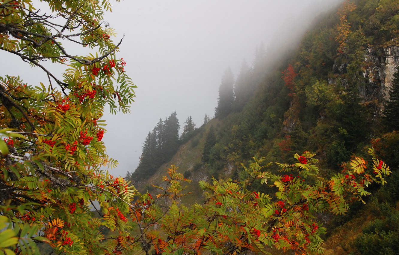 Photo wallpaper autumn, forest, trees, mountains, branches, fog, berries, rocks, slope, Rowan
