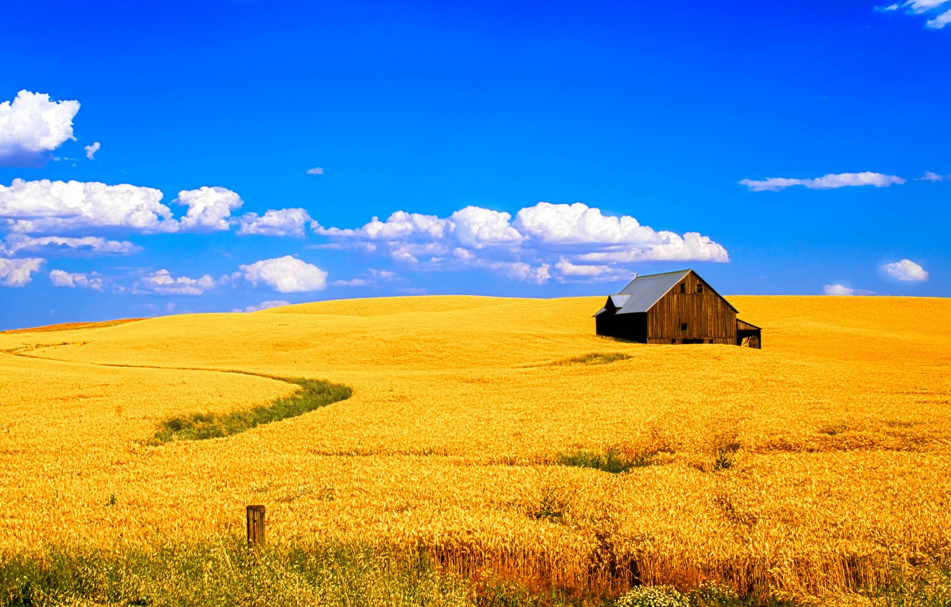 Photo wallpaper wheat, field, the sky, clouds, landscape, house