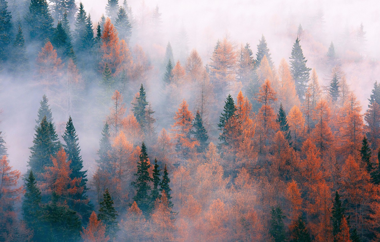 Photo wallpaper autumn, forest, trees, nature, fog, November