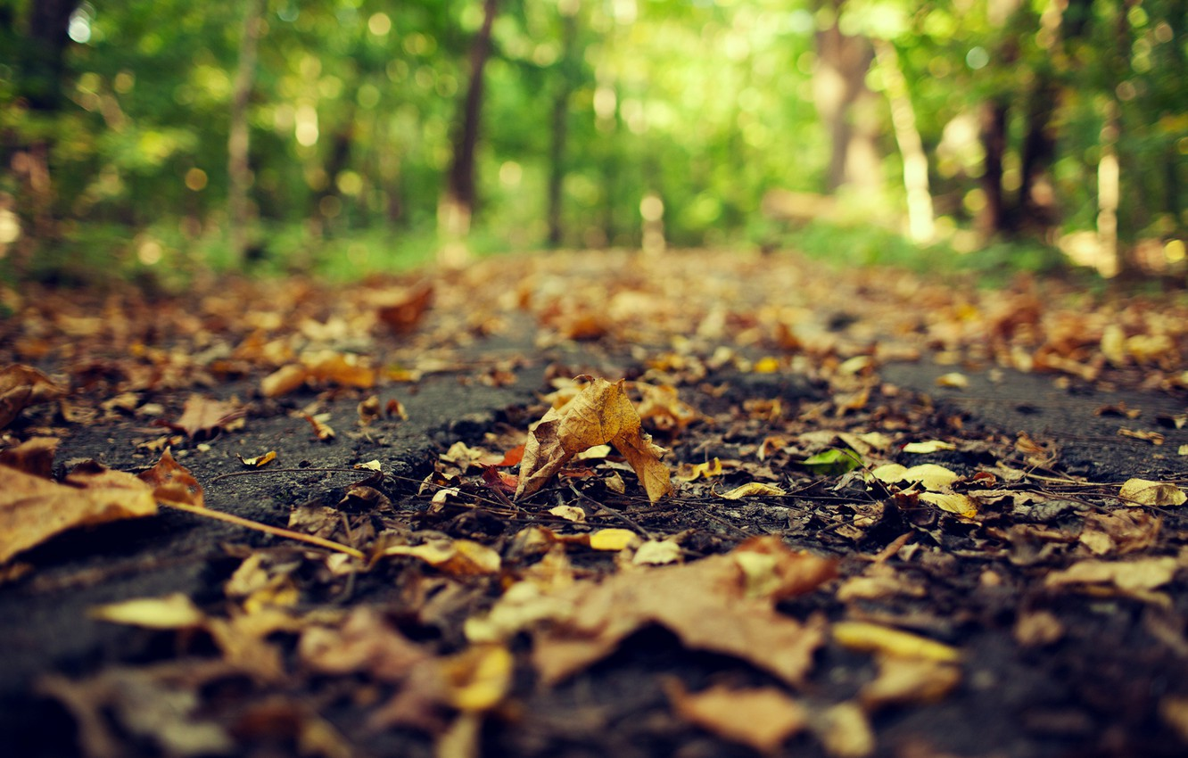Photo wallpaper road, autumn, asphalt, leaves, macro, nature, yellow, blur, dry, fallen, bokeh