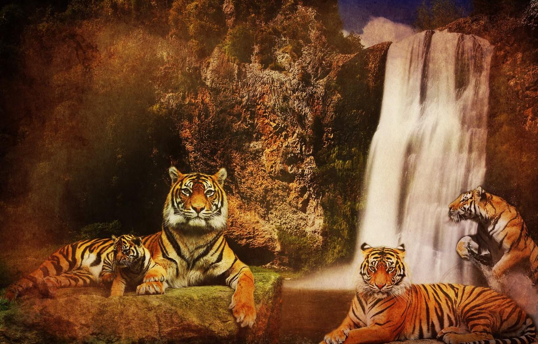 Photo wallpaper water, cats, mountains, background, rocks, waterfall, predators, Tigers